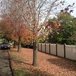 Autumn leaves street view