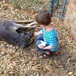 Patting a kangaroo
