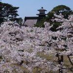桜と奉行所