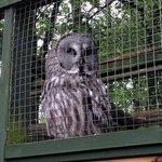 owl at the falconery