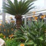Hotel Caravel garden