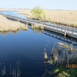 Point Pelee marshland
