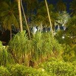 les cocotiers de l'hotel de nuit