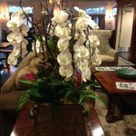 Beautiful Orchids Everywhere!