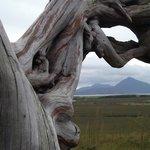 Bog oak sculpture in Ballycroy National Park looking towards Slievemore on Achill Island