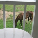 Wild horses every morning outside!