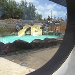 water park and slides