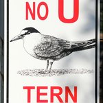 Every good tern deserves another