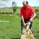Hand Shearing