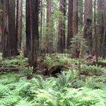 Valley of ferns