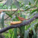 birds feeding while eating breakfast