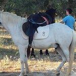 My horse....