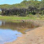 Lagune von Porto Ottiolu