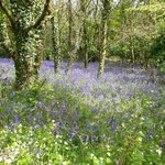 One of the many beautiful views from the bluebell walk