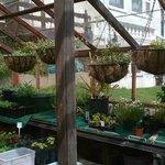 Greenhouse growing herbs, vegetables, hanging baskets