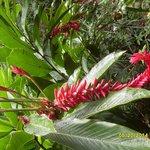 beaufiful flora