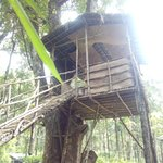 tree top used for dining and lunch.