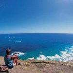 & Cape Reinga. $50 tour with free lunch