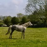 Horse in pasture at the farm.