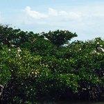 Everglades Mangrove Rookery