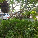 Car Park and Garden