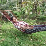 Napping in the Hammocks