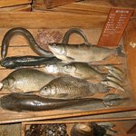 琵琶湖夏の魚