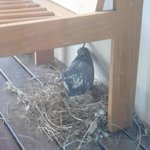 birds nest on our balcony!