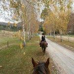 Horse trek along main road
