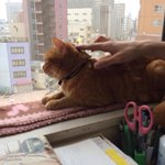 A bird's eye view of the city for a cat