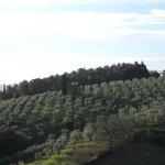 Blick aus den hinteren Zimmern auf Olivenbäume