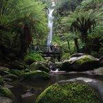 Erskine Falls lookout