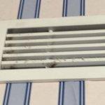aus der Klimaanlage krabbelt es