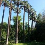 уютная прохлада Национальных садов Афин
