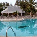 Tortuga Beach Club Pool