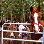 Kiloran Farm Horse & Pony Rides