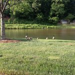 Pond on property with ducks