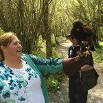 Walk with a hawk experience