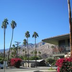 From anywhere on the grounds you get that spectacular Palm Springs view of blue sky, palm trees,