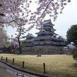 Sakura at Matsumoto