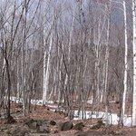 Norakura Kogen Birch Forest and Mountain