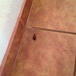 Roach in room