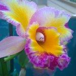 Akatsuka Orchid Farm