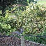 Vida selvagem nos jardins