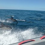The Dolphins out at sea