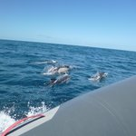 Dolphins out at sea