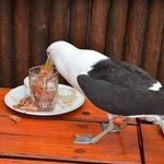 Os pássaros estão sempre presentes no deck do Lookout