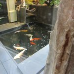 View of koi pond from the elevator