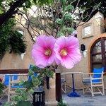 Sehr gepflegte, schön bepflanzte Terasse liebevoll mit vielen Details dekoriert