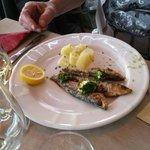 sardines as an appetizer